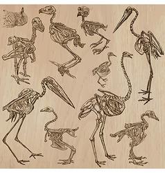 Birds Bones Skeletons - freehands vector image vector image