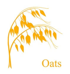 Oat cereals vector
