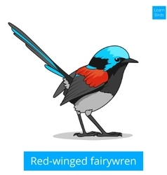 Red winged fairywren bird educational game vector
