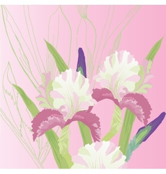 Pink background with pink irises vector