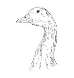 a goose head vector image