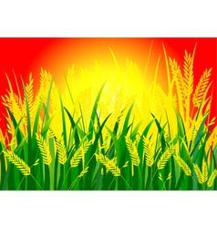 Rice and sun vector