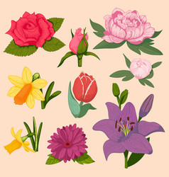Beautiful watercolor flower set isolated vector