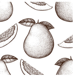 Ink hand drawn pomelo background vector