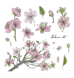 realistic sakura hand drawn set with buds flowers vector image vector image