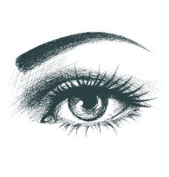 Beautiful female eye hand drawn vector