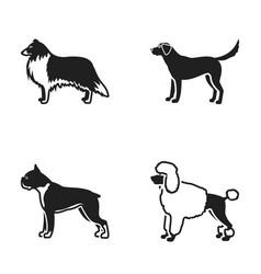 Collie labrador boxer poodle dog breeds set vector