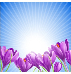 Flowers in spring vector image