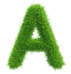 capital letter a from grass on white vector image vector image