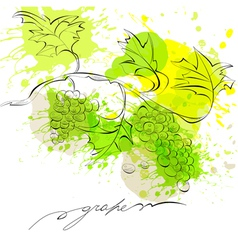 sketch of grapes vector image