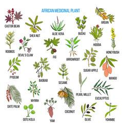 African medicinal plants vector