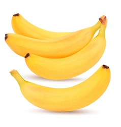 Bunch of bananas vector image vector image