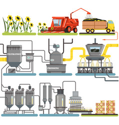 Sunflower oil production process stages vector