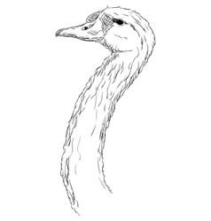 a swan head vector image vector image