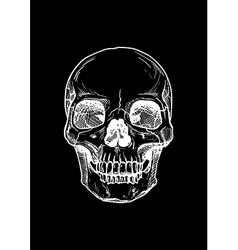 human skull with a lower jaw vector image