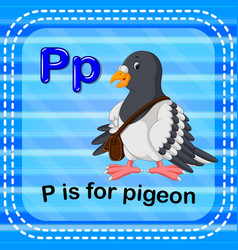 Flashcard letter p is for pigeon vector