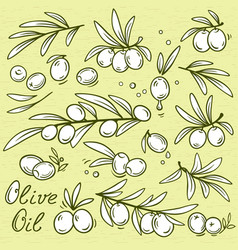 set of isolated graphic olives vector image
