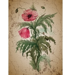 Bouquet of red poppies vector image