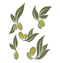 fresh olives vector image vector image
