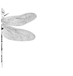 Elegant partial dragonfly insect detailed sketch vector