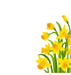 Spring narcissus vector