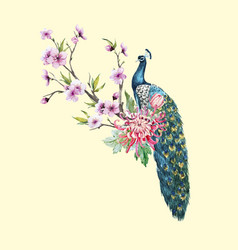 Watercolor peacock with flowers vector