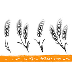 set of wheat ears vector image