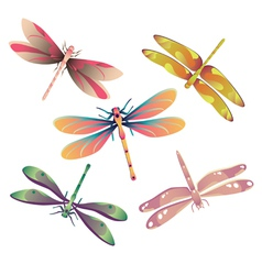 Dragonflies vector