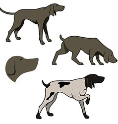 Set of hunting dogs vector image
