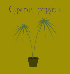 Flat on background plant cyperus vector