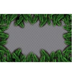 fir branch on transparent background vector image vector image