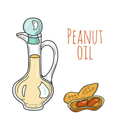 Colorful hand drawn peanut oil bottle vector