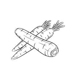 Hand drawn carrot sketches on white background vector
