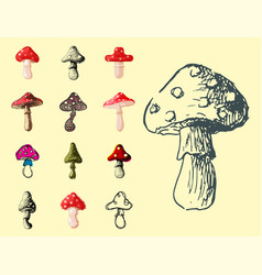 Amanita fly agaric toadstool mushrooms fungus vector
