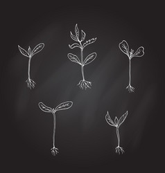 sprouts young plants hand drawn vector image vector image