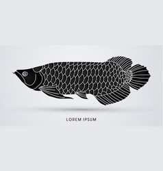 arowana fish graphic vector image