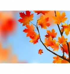 maple tree leaves vector image