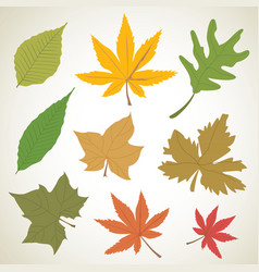 Set of colorful autumn leaves nature vector