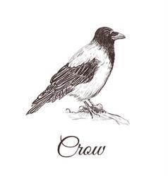 crow sketch vector image vector image