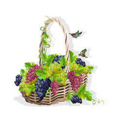 Wicker basket with grapes vector