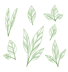 Leaves shape vector