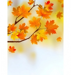 Autumn falling leaves vector