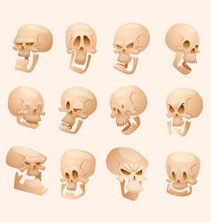Human skull face isolated on vector