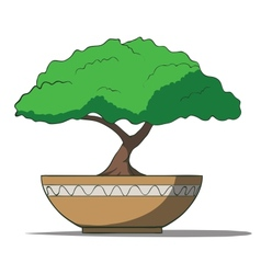 colorful bonsai tree isolated on white background vector image