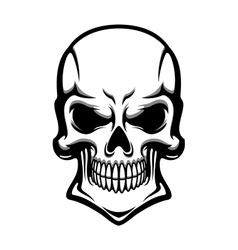 Danger human skull with eerie grin vector