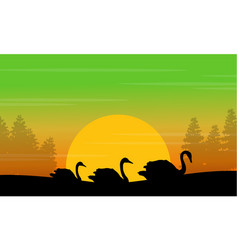 Silhouette of swan in the hill at sunrise scenery vector