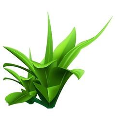 Water plant vector