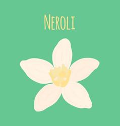 neroli flower oil plant essential cosmetics vector image