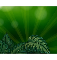 Leaves with green rays vector