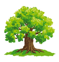 Oak with lush green crown vector